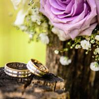 Perfect wedding rings on tree log